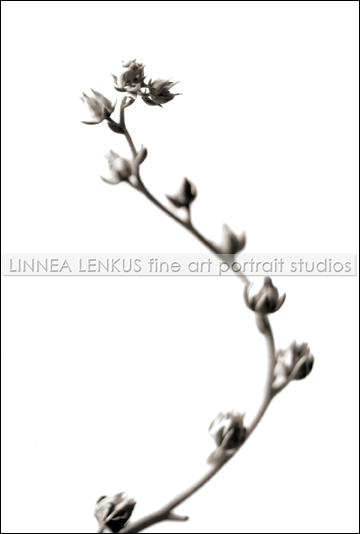 photo by Flower photographer, Linnea Lenkus.