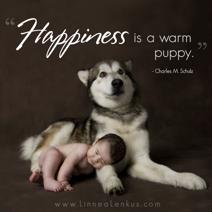 Inspirational Pet Quotes: Happiness Is A Warm PuppyInspirational Quotes