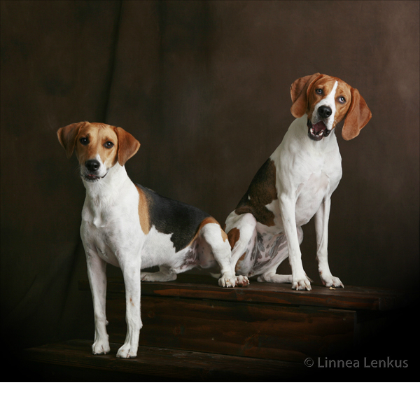Los Angeles Pet Photography